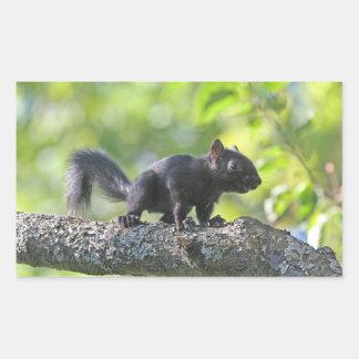 Baby Black Squirrel Rectangular Sticker