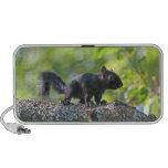 Baby Black Squirrel Travel Speakers