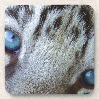 Baby Blue Eyes Coaster