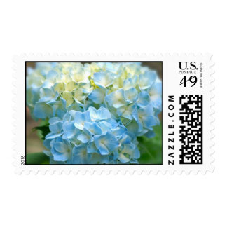 Baby Blue Hydrangea Blossoms Postage