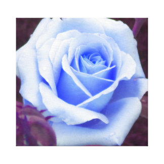Baby Blue Rose Wrapped Canvas Print