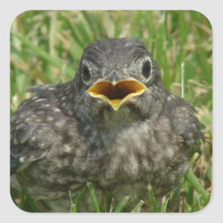 Baby Bluebird Square Sticker
