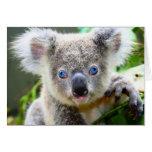 """""""Baby Blues"""" Koala Stationery Note Card"""