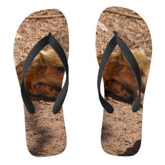 baby boar flip flops