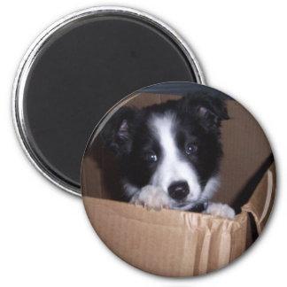 Baby Border Collie 2 Inch Round Magnet