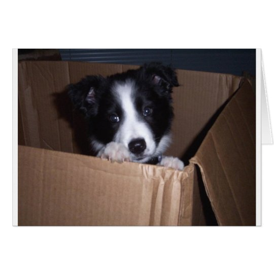 Baby Border Collie Card