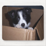 Baby Border Collie Mouse Pads