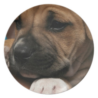 Baby Boxer Plate