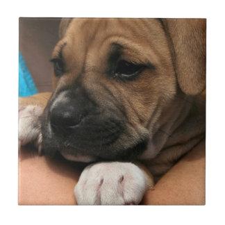 Baby Boxer Tile