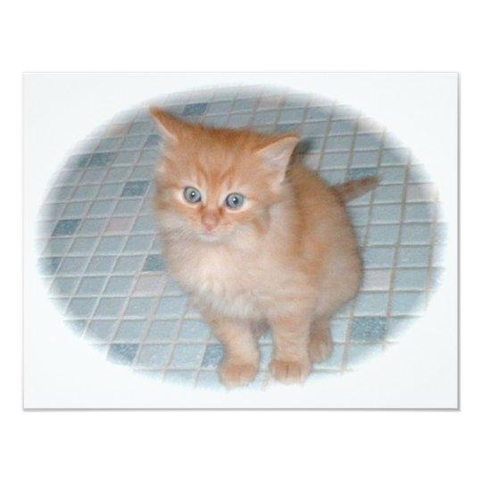 baby boy[1] (2) kitten card