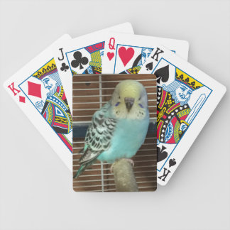 Baby budgie bicycle playing cards