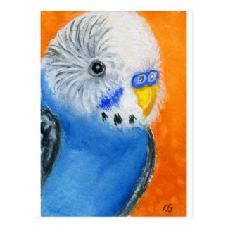Baby Budgie Post Cards
