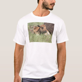 Baby Buffalo Adult Tshirt
