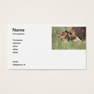Baby Buffalo Business Card