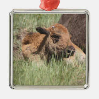 Baby Buffalo Ornament