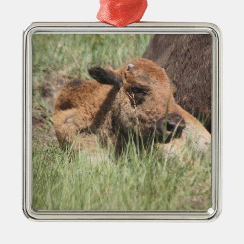 Baby Buffalo Ornament