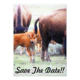 "Baby Buffalo - Save the Date Party Invitation 5.5"" X 7.5"" Invitation Card"