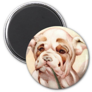Baby Bull-Dog - SUPER CUTE ! Magnet