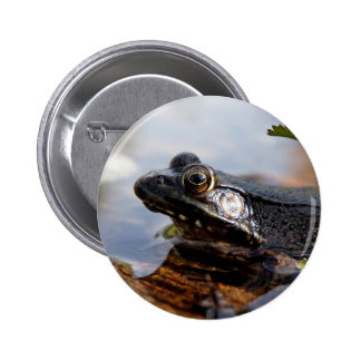 Baby Bullfrog Button