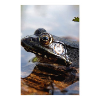 Baby Bullfrog Stationery