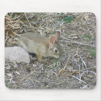 Baby Bunny And Grass Blade Mouse Pad