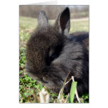 Baby Bunny Card