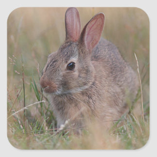 Baby bunny in the grass square sticker