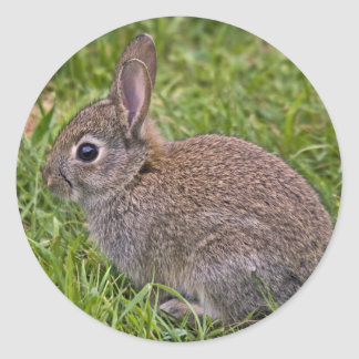 Baby Bunny Sticker