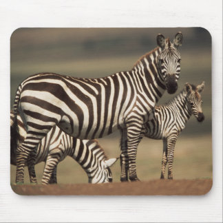 Baby Burchell's Zebra with mother Mouse Pad