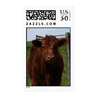 Baby Calf Postage