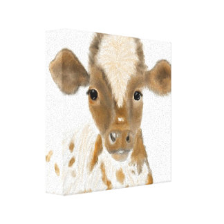 Baby Calf Stretched Canvas Prints