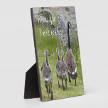 Baby Canada Geese Photo Plaques