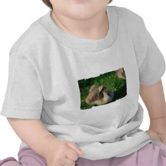 Baby Canadian Goose Baby T-Shirt