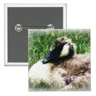 Baby Canadian Goose Photo Sketch Pinback Button