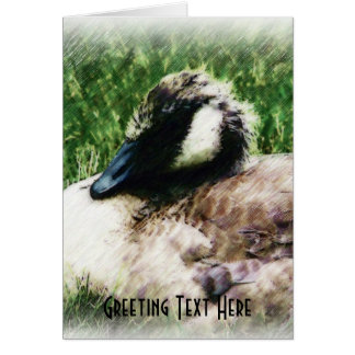 Baby Canadian Goose Photo Sketch Card