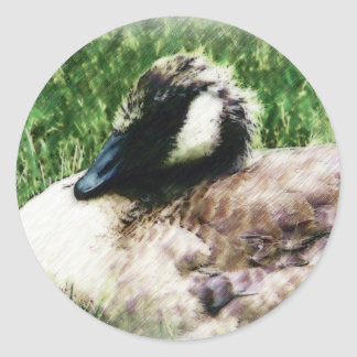 Baby Canadian Goose Photo Sketch Classic Round Sticker