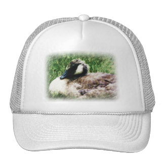 Baby Canadian Goose Photo Sketch Mesh Hats