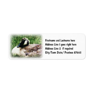 Baby Canadian Goose Photo Sketch Label