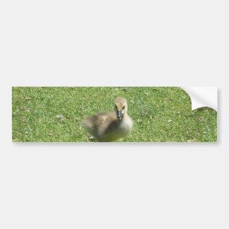 Baby Candian Goose Bumper Sticker
