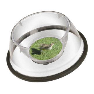 Baby Candian Goose Pet Bowl