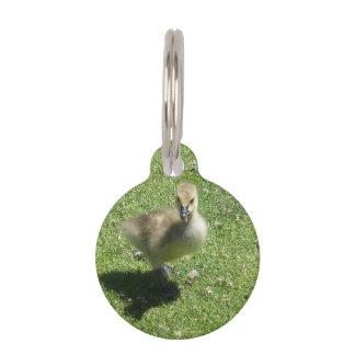 Baby Candian Goose Pet Name Tag