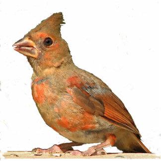 Baby Cardinal Christmas Hanging Acrylic Statuette