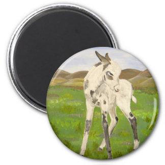 Baby Carrera donkey! 2 Inch Round Magnet
