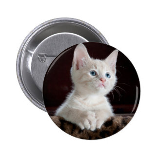 Baby Cat Pinback Buttons