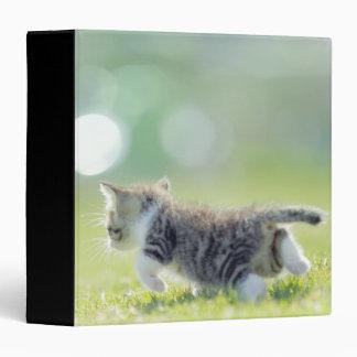 Baby cat running on grass field. 3 ring binders