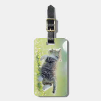 Baby cat running on grass field. bag tag
