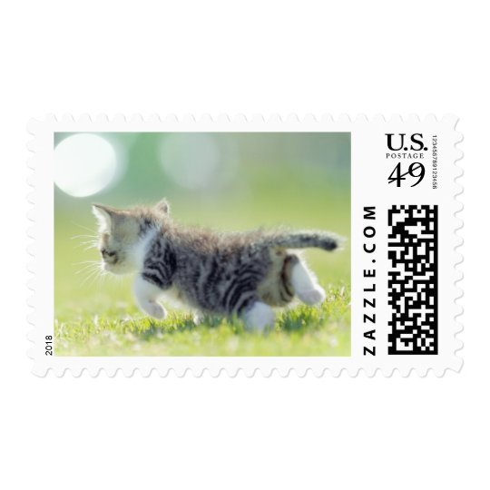 Baby cat running on grass field. postage