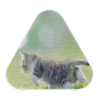 Baby cat running on grass field. speaker
