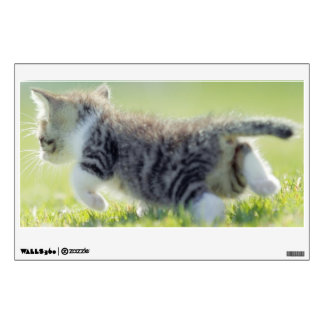 Baby cat running on grass field. wall decal