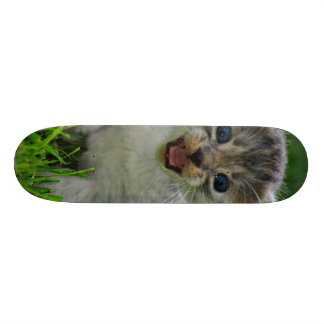 Baby cat skate board deck